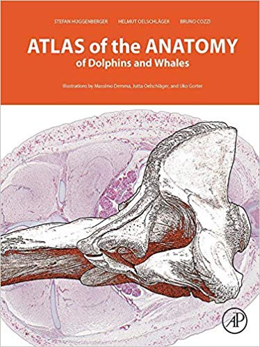 Atlas of the Anatomy of Dolphins and Whales, 1st Edition